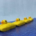 duck_f12